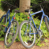 Two blue bikes leaned against a tree